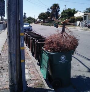 sustainability-dumped-Christmas_tree